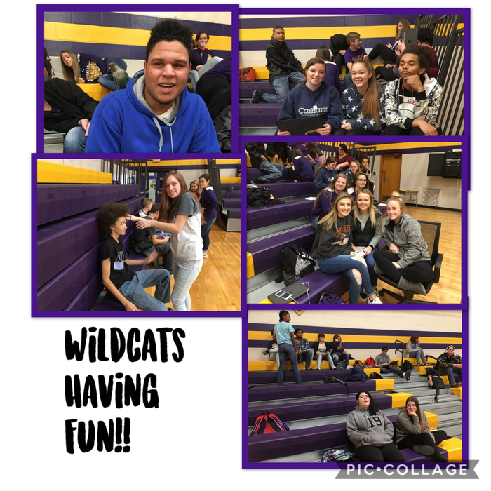 Wildcat fun