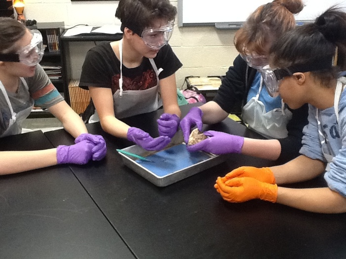 Students dissecting sheep heart.